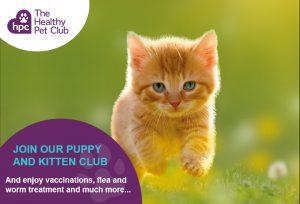 Healthy Pet Club kitten advert